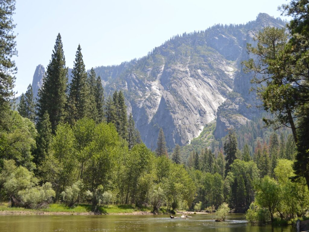 Yosemite mountains and pine trees
