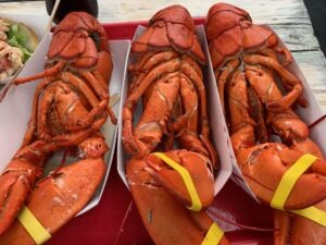 three fresh lobster in Boston